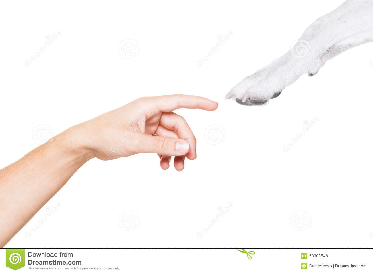 Dog And Owner High Five Stock Photo