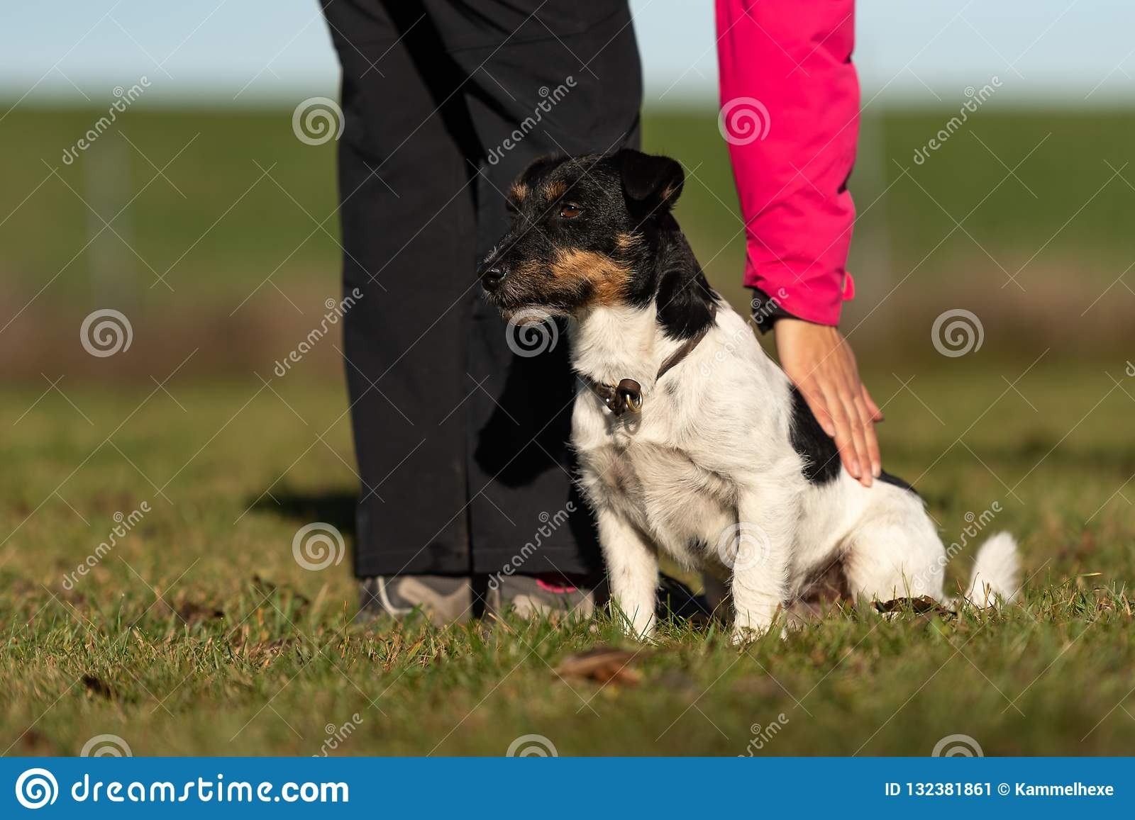 Dog and owner. Sport with an obedient jack russell terrier
