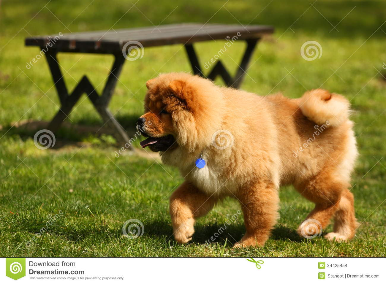 Dog In Park Stock Images - Image: 34425454