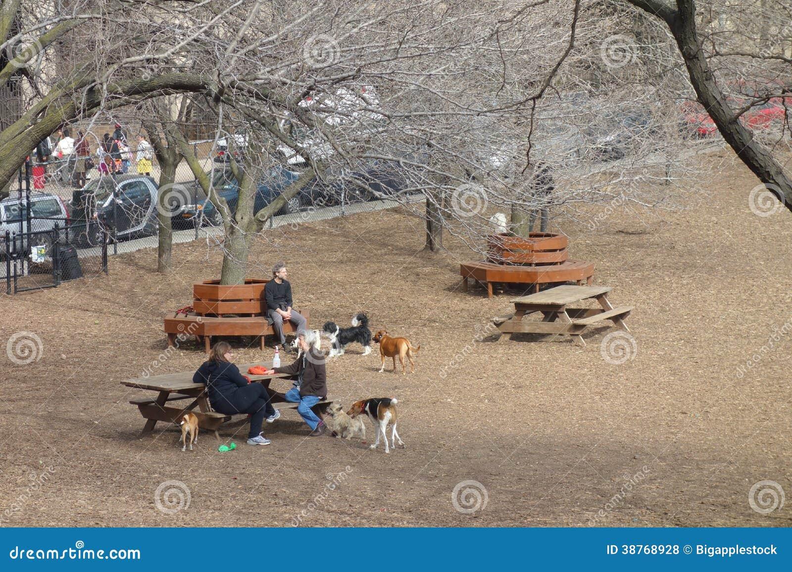 New York City Dog Park