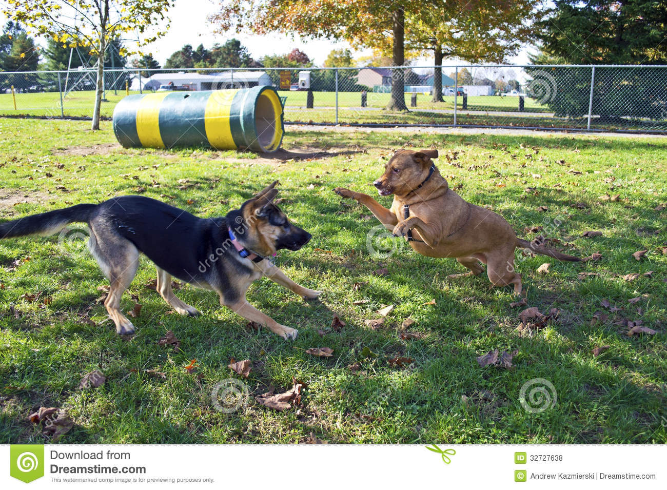 How to Start a Dog Park Business