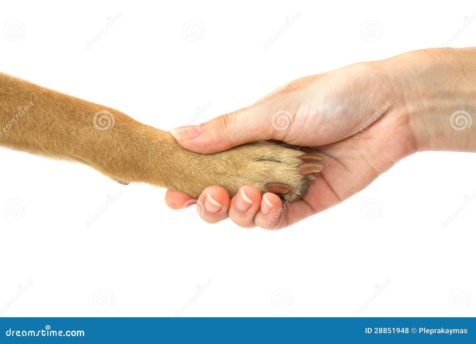 Puppy anatomy female