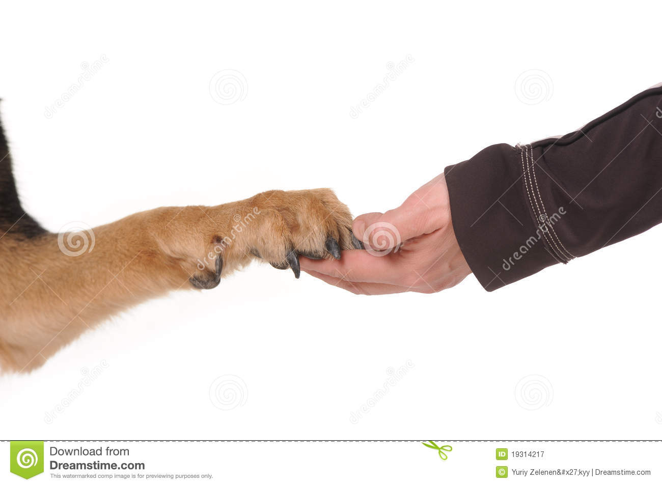 Dog Paw In Hand Free Download