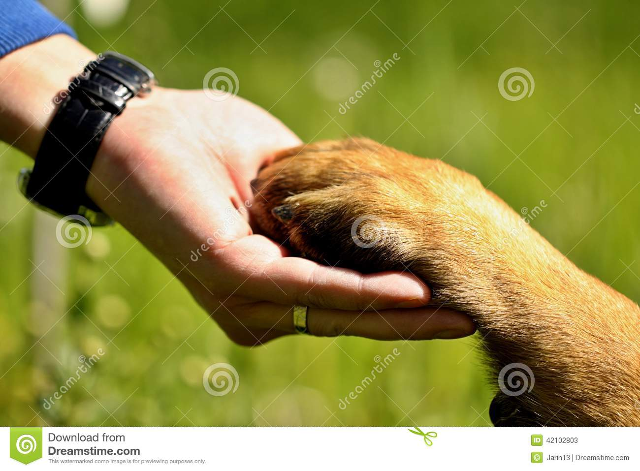Are Dogs Only Man S Best Friend