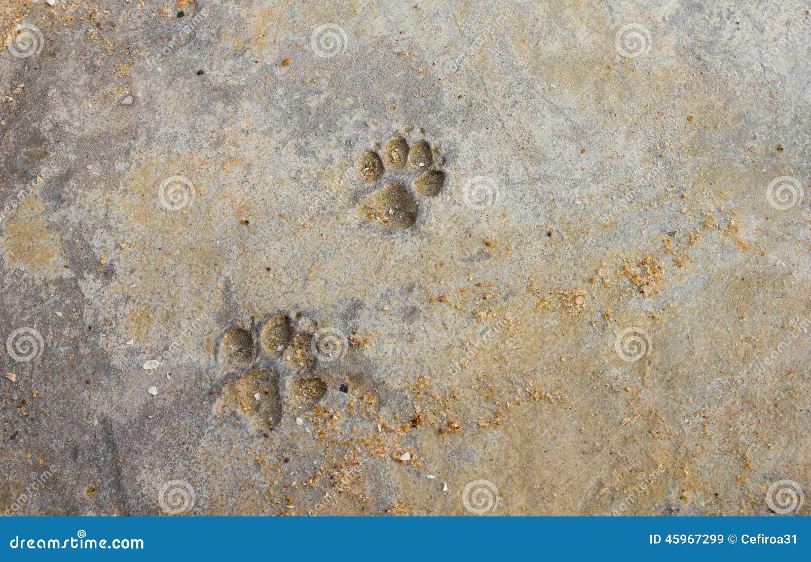 Dog Paw Prints Stock Photo Image 45967299