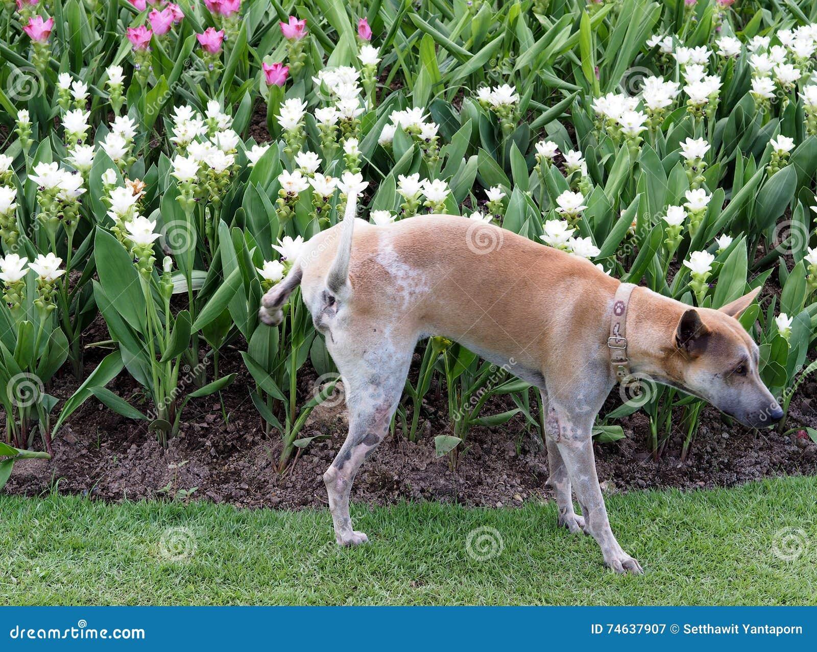 Peeing in the garden