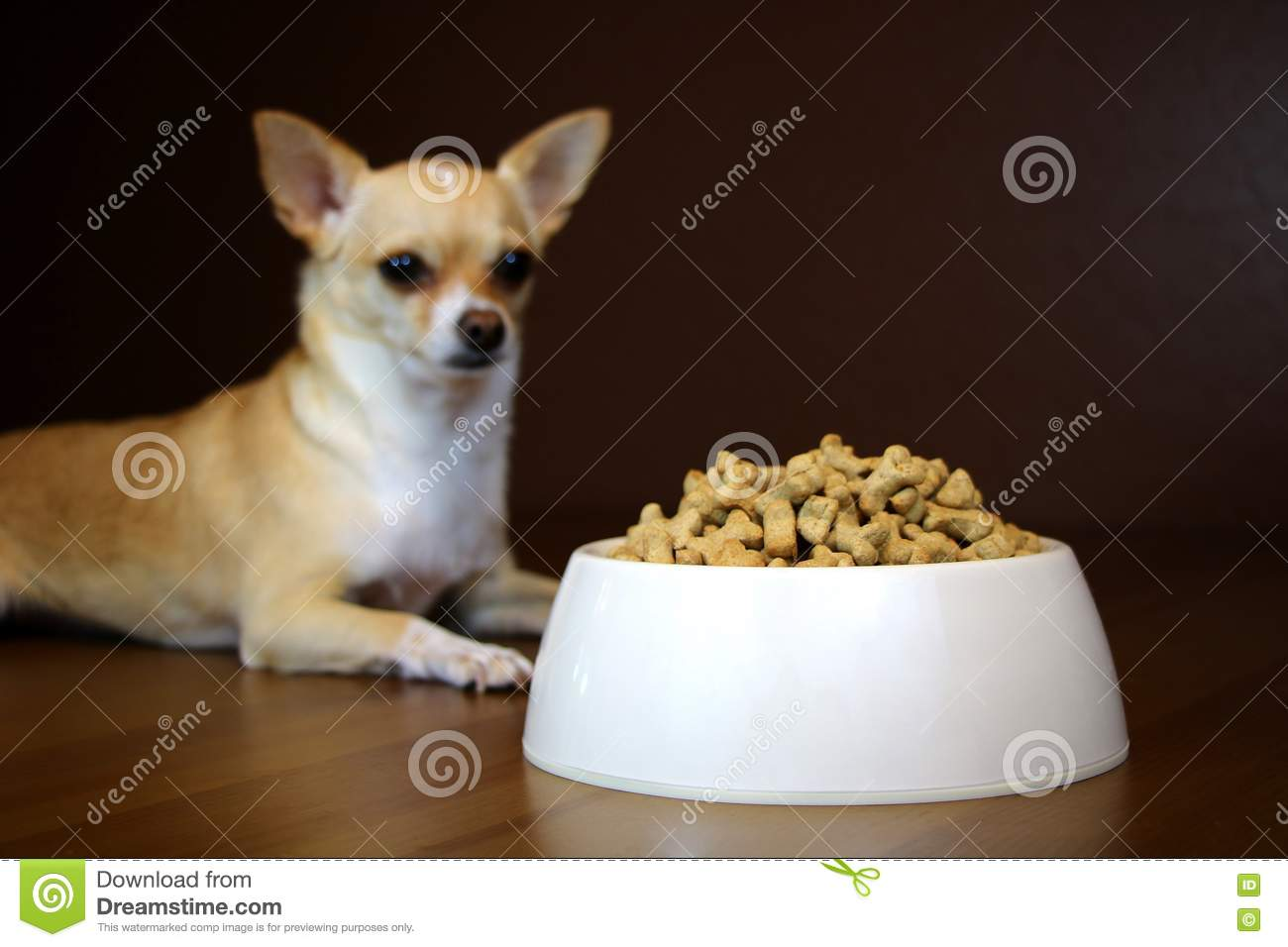 Download Dog Perspective Of A Food Bowl Stock Photo - Image of full, dish: 77817888