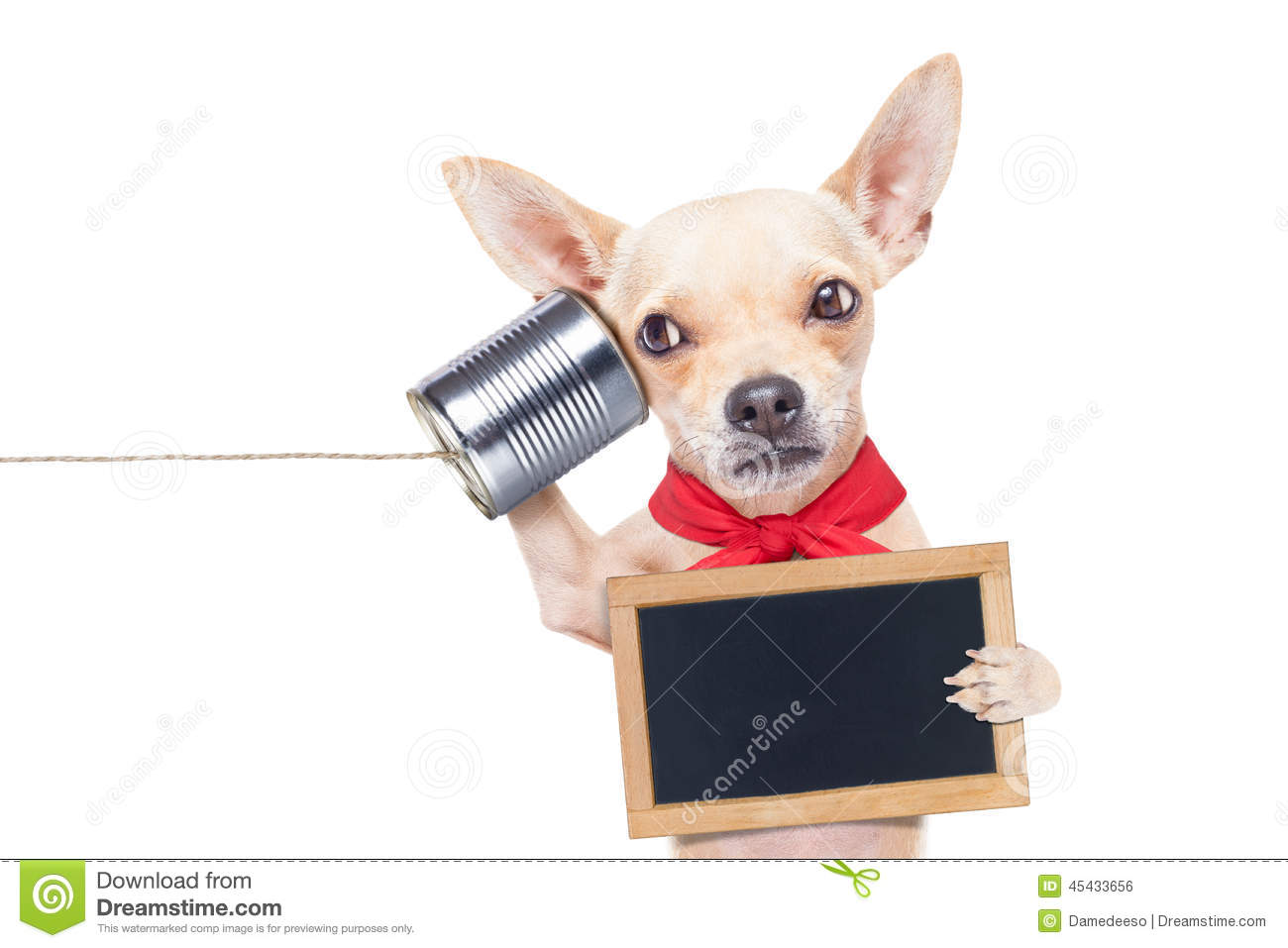 Chihuahua dog talking on the phone surprised, holding a blank