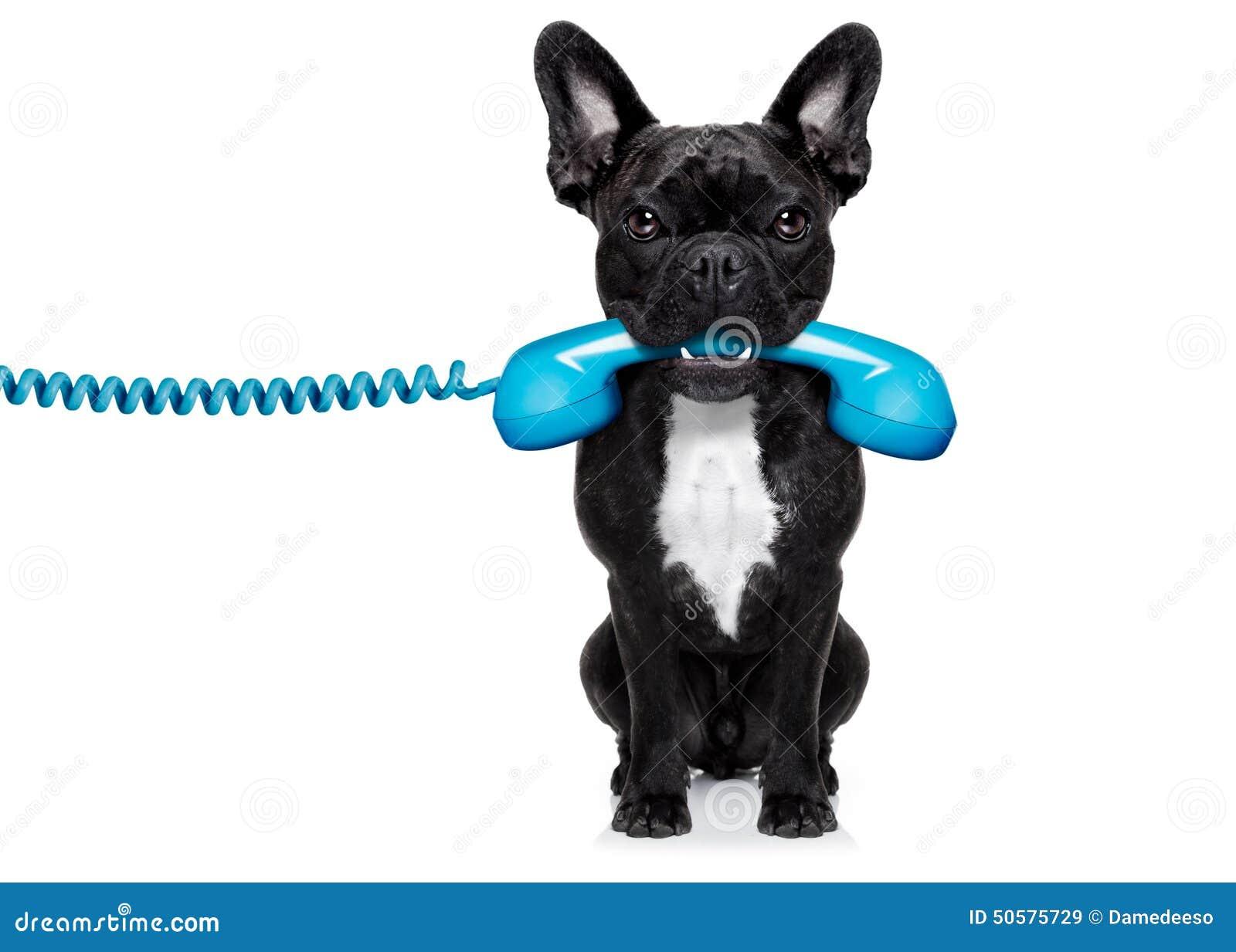 Free Dog Help Hotline