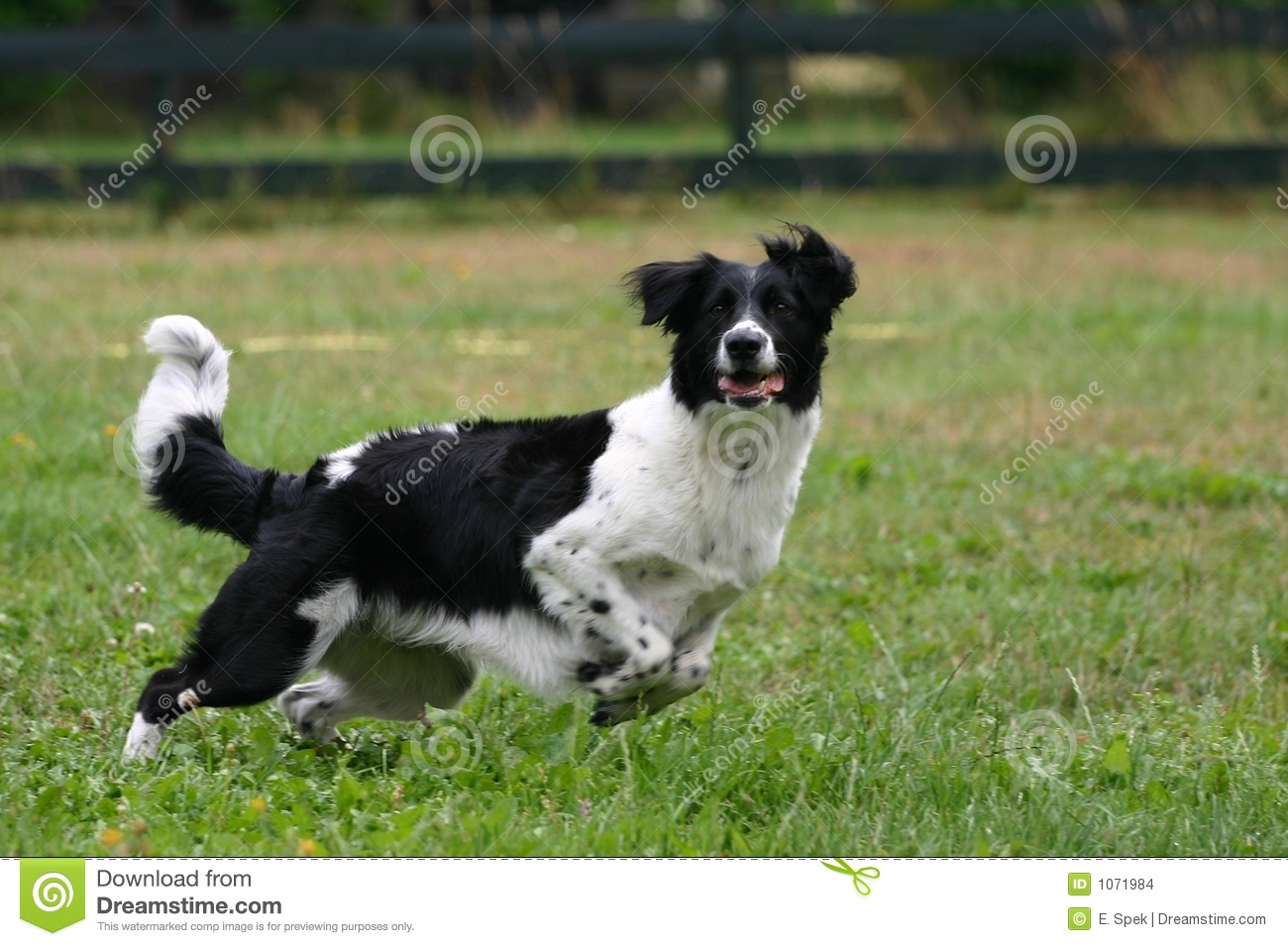 dog playing with a ball stock images image 1071984