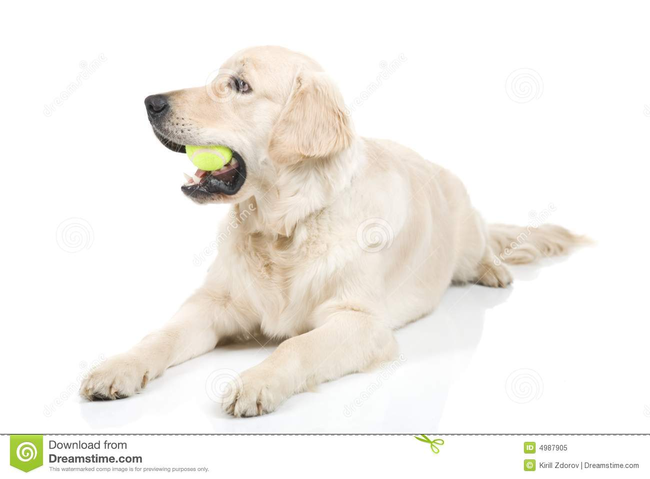 Dog Playing With Ball Royalty Free Stock Photo Image
