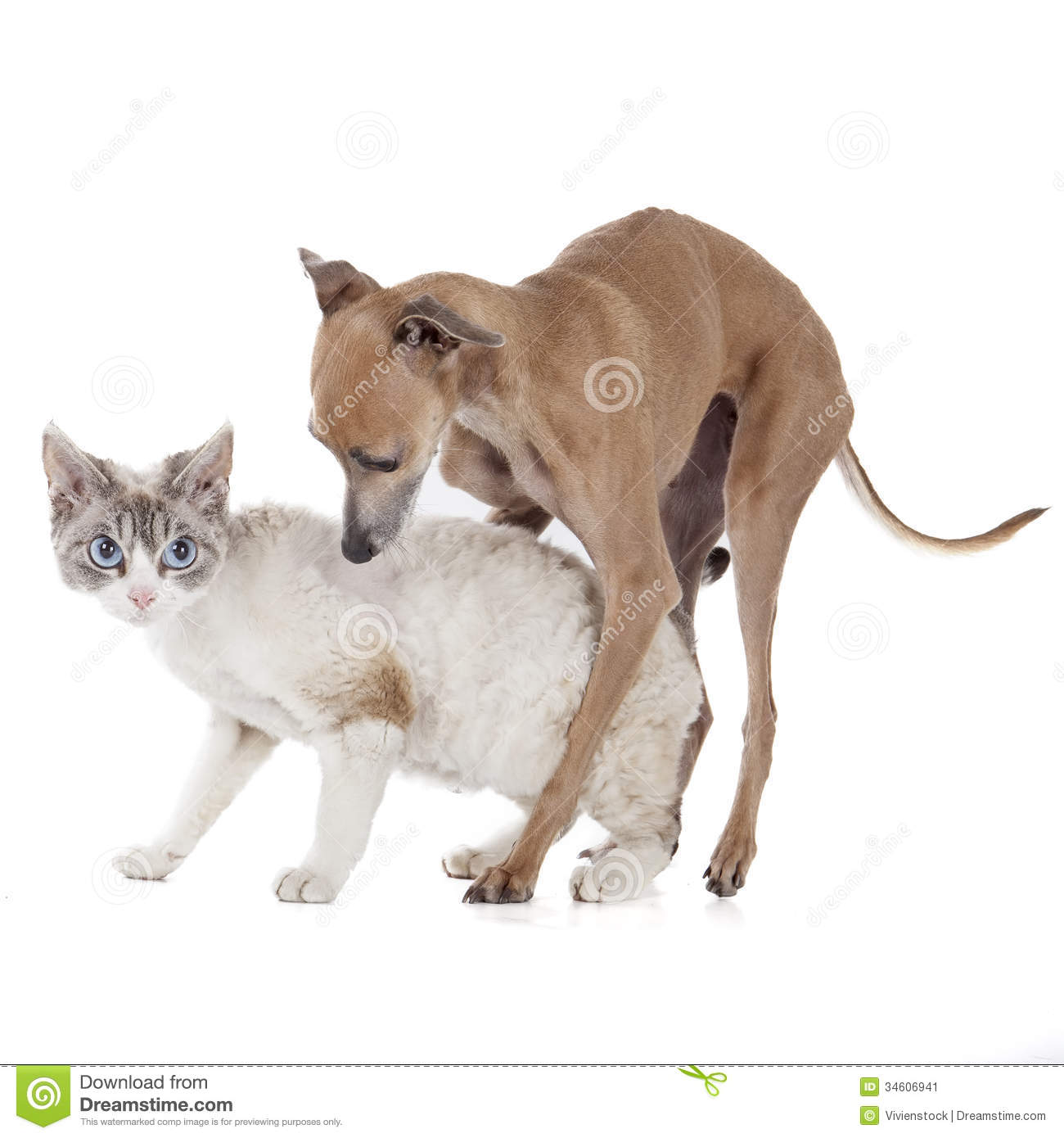 dog playing with a cat stock image image 34606941. Black Bedroom Furniture Sets. Home Design Ideas