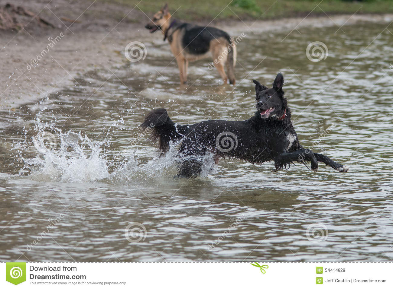Dog playing fetch in water
