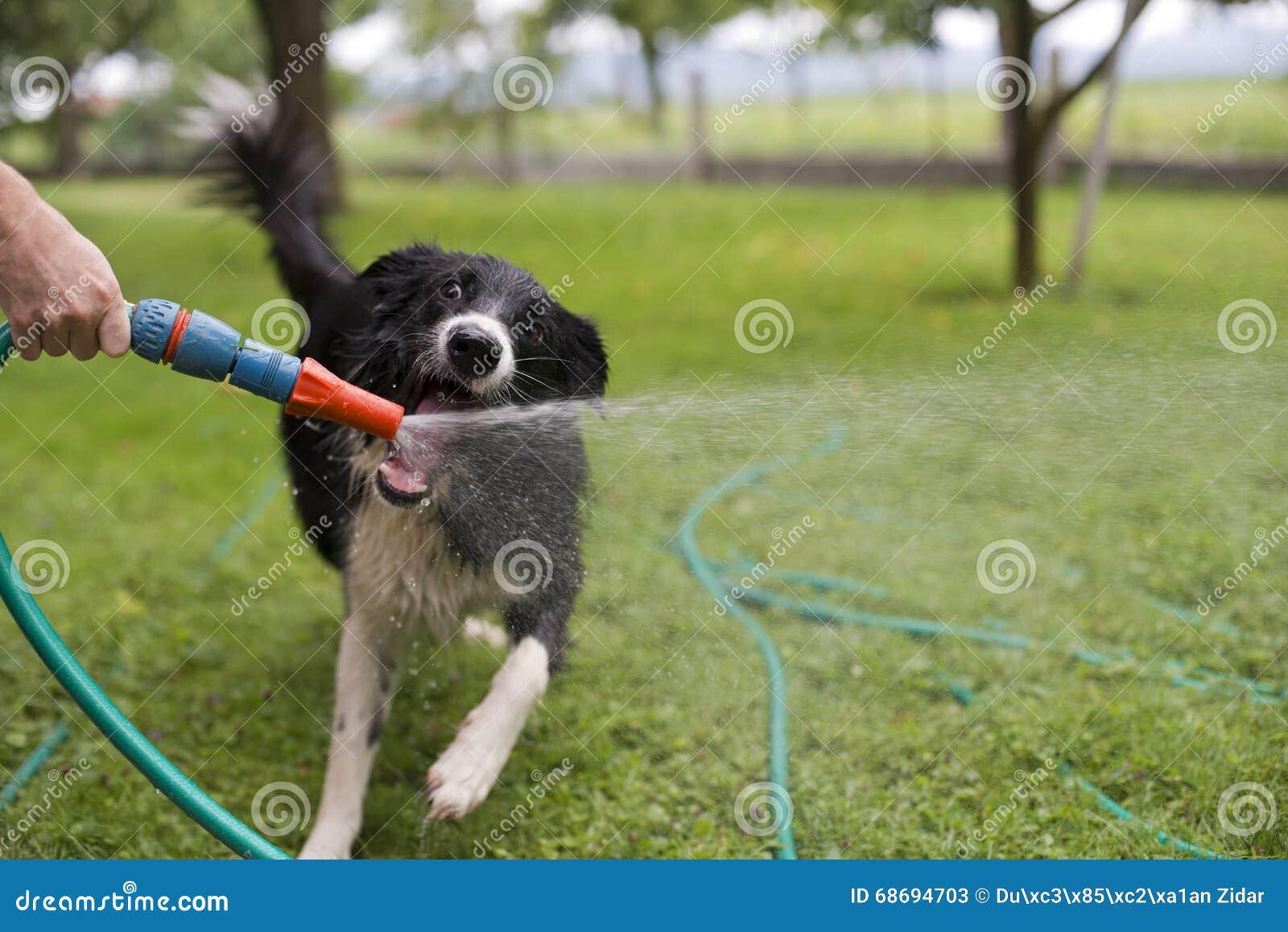 Download Dog playing stock image. Image of pipe, shower, animal - 68694703