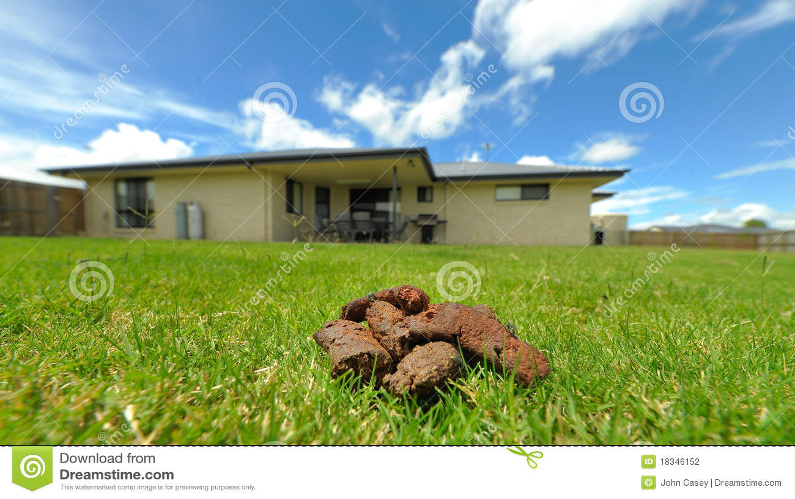 Dog Poo In Backyard Stock Photography Image 18346152