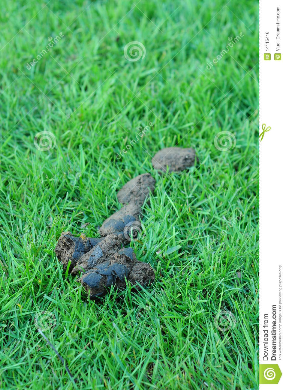 dog poop on grass royalty free stock image image 14115416
