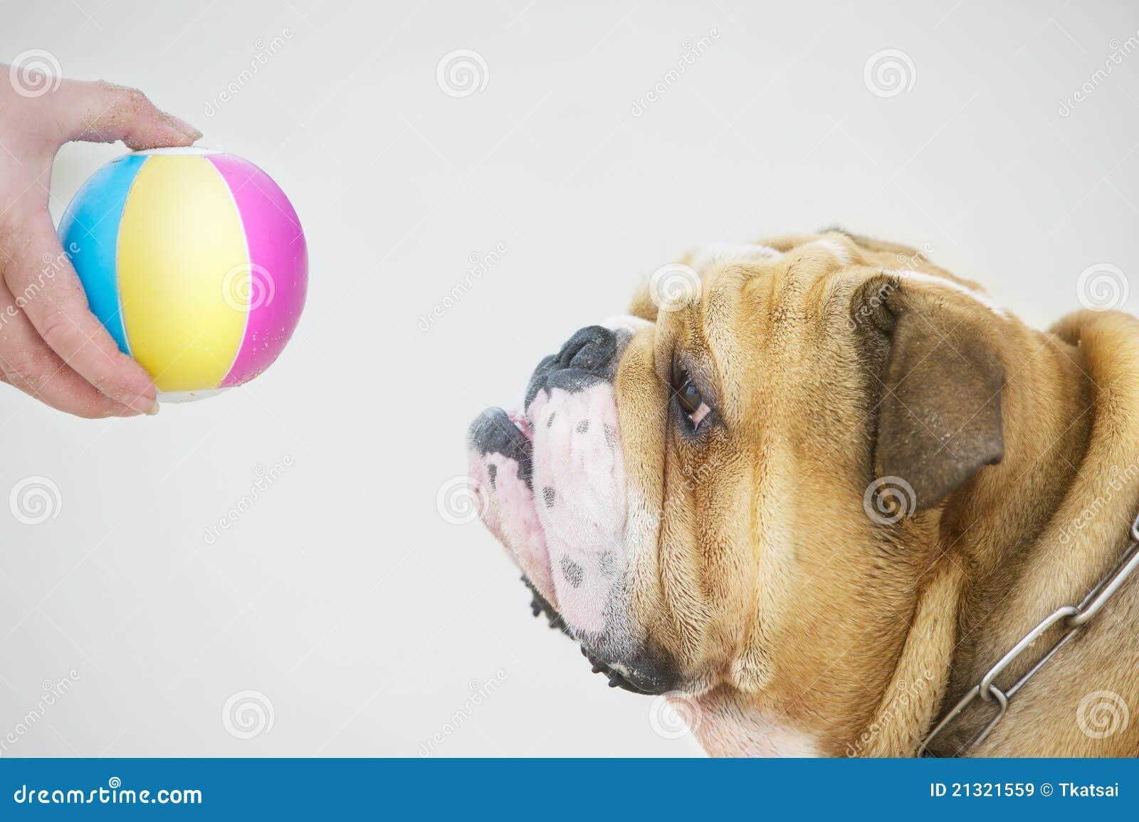 Canine Unlimited Dog Training