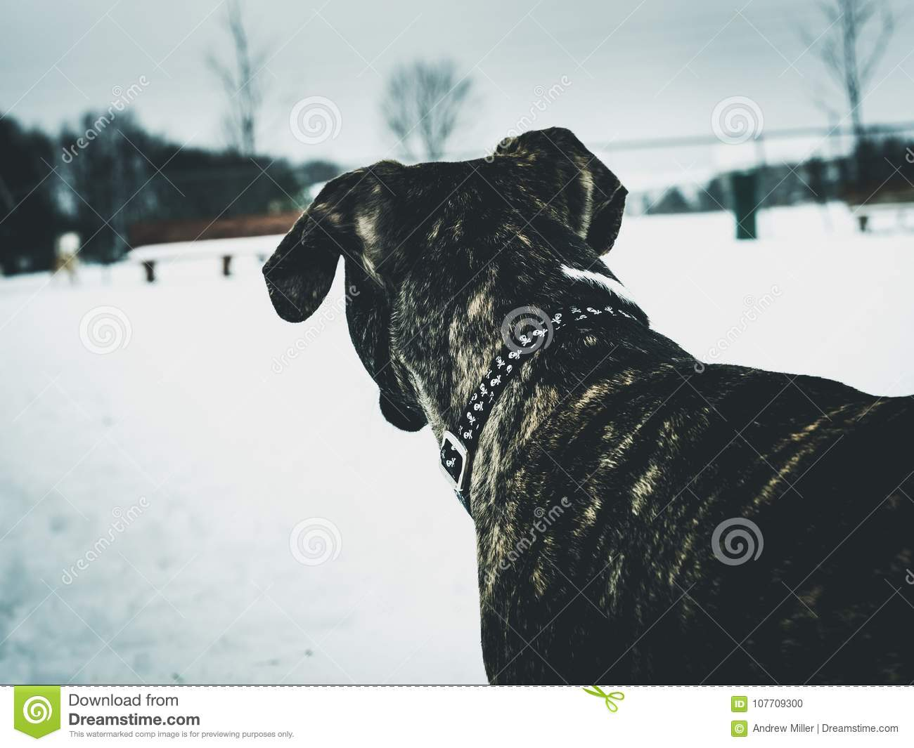Dog looking away in snow