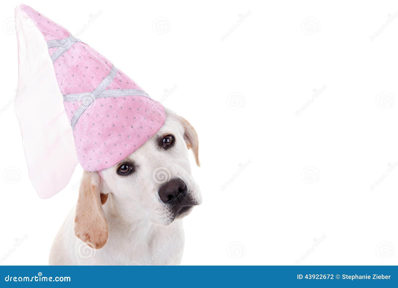 Download Dog Princess stock photo. Image of ballerina girl costume - 43922672  sc 1 st  Dreamstime.com & Dog Princess stock photo. Image of ballerina girl costume - 43922672