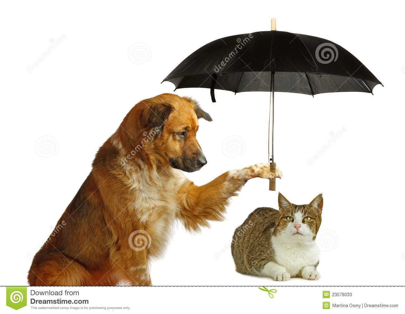 how to train your dog to protect