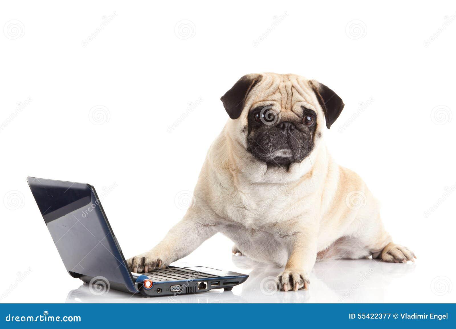 Dog Pugdog Computer Isolated On White Background Laptop