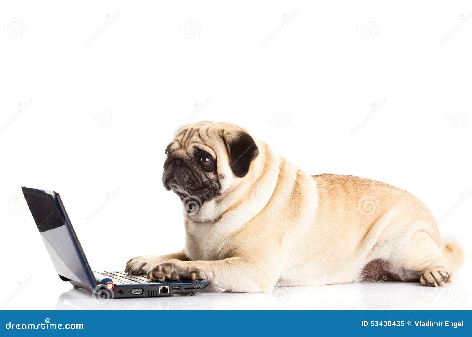 Dog Pugdog Computer Isolated On White Background Stock