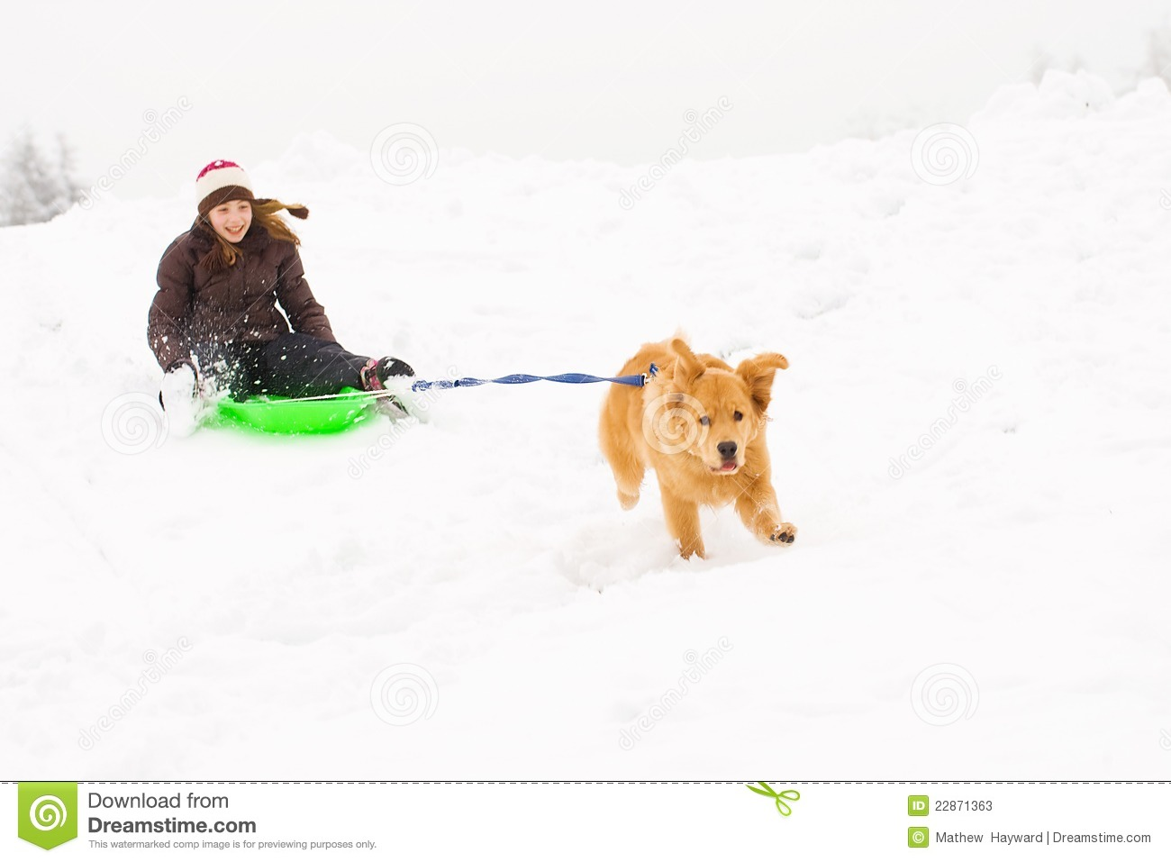 Dog Pulling A Happy Kid On A Snow Sled Stock Image - Image ...