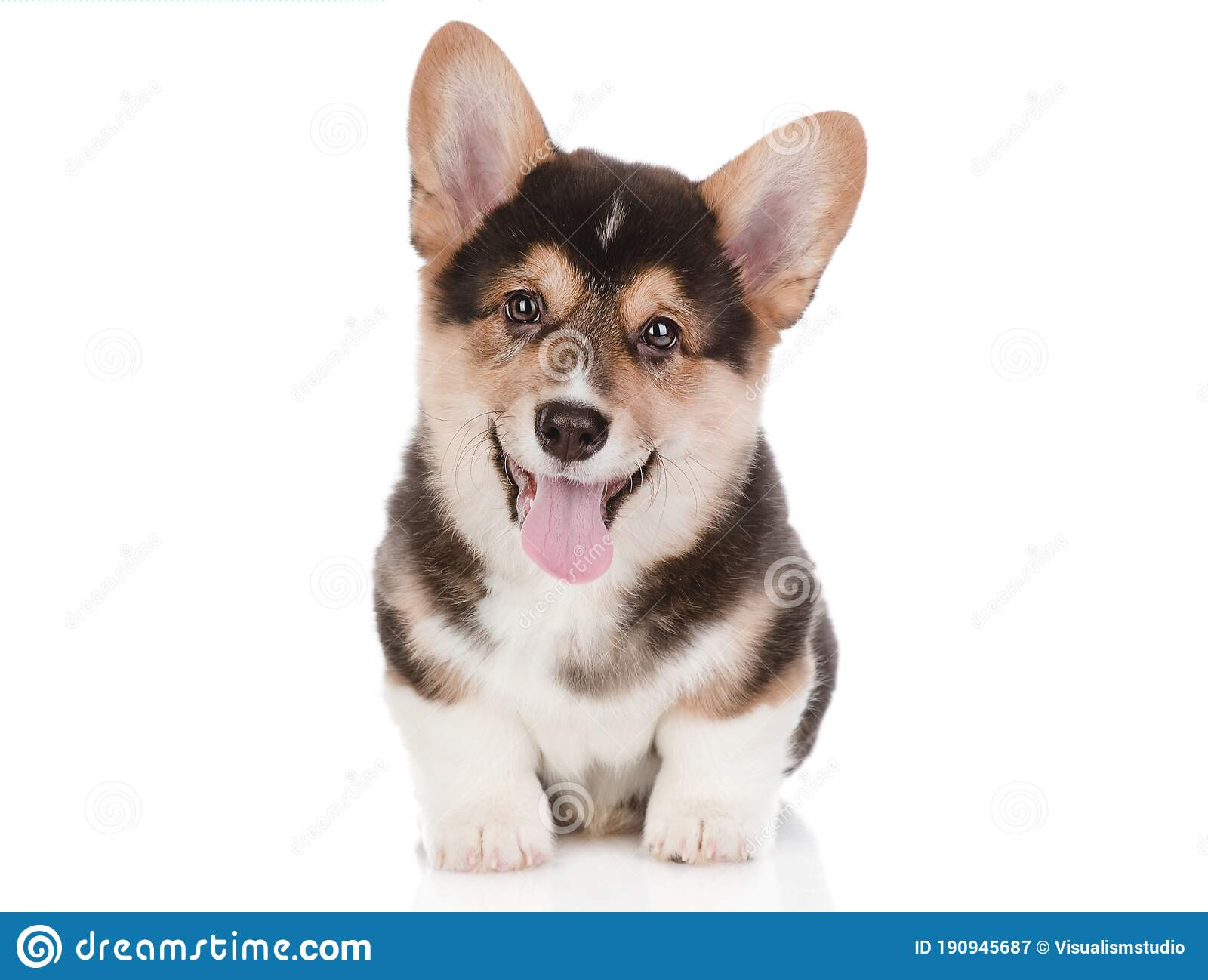 Dog Puppies Funny Smiling Puppy Dog A Paw And Cute Puppy On White Stock Image Image Of Cartoon Doggy 190945687