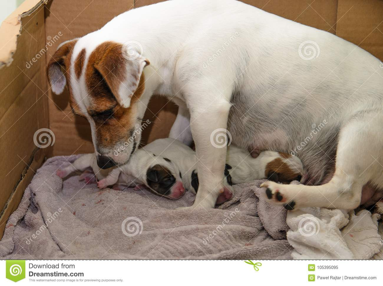dog after birth