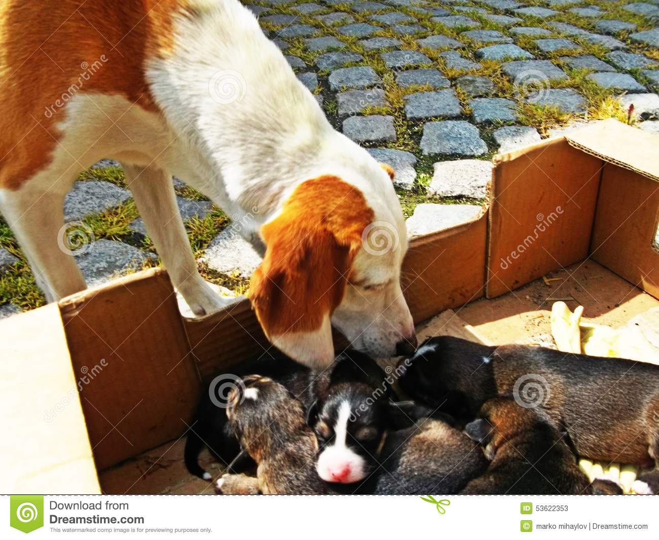 Dog Puppy Dogs Hd Pets Animals Pet Stock Image Image Of Puppy Pets 53622353