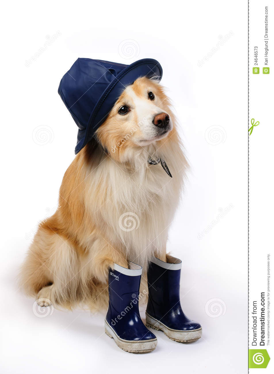 Dog With Rain Boots And Hat Stock Photos Image 24646573