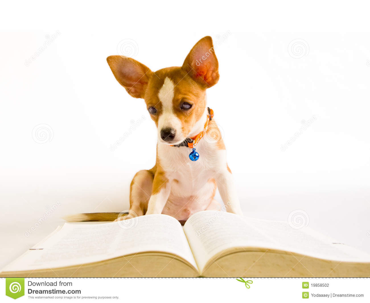Dog Read Book Stock Photography - Image: 19858502