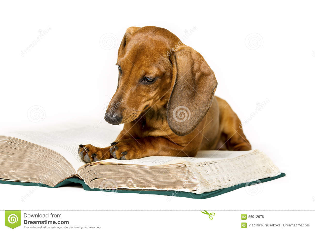 Tree coloring pages only coloring pages - Dog Read Book Animal School Education Reading On White Stock Photo