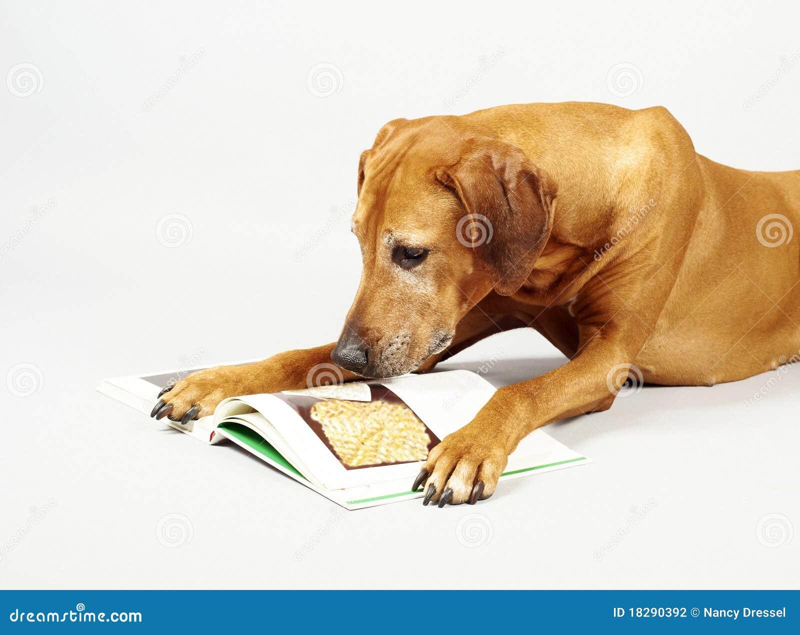 Dog Reading Book Stock Photography - Image: 18290392