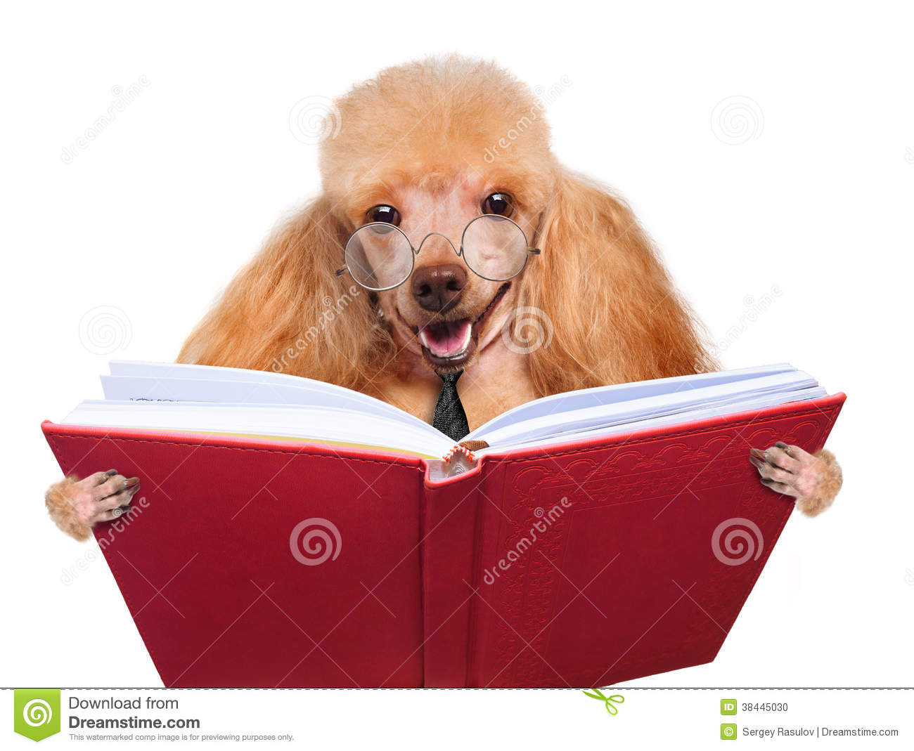Dog Reading A Book Stock Photo - Image: 38445030
