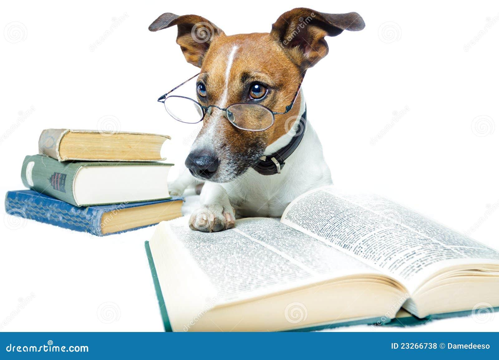 Dog Reading Books Royalty Free Stock Photos - Image: 23266738