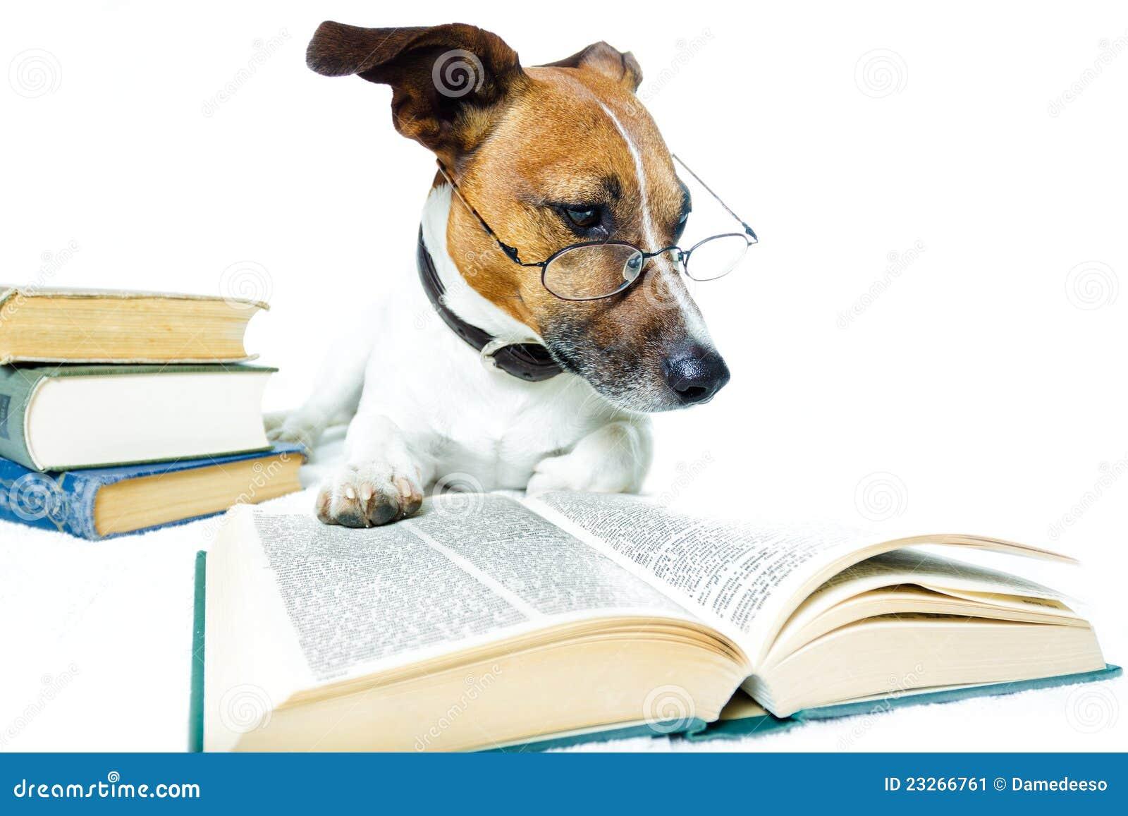Dog Reading Books Stock Image - Image: 23266761