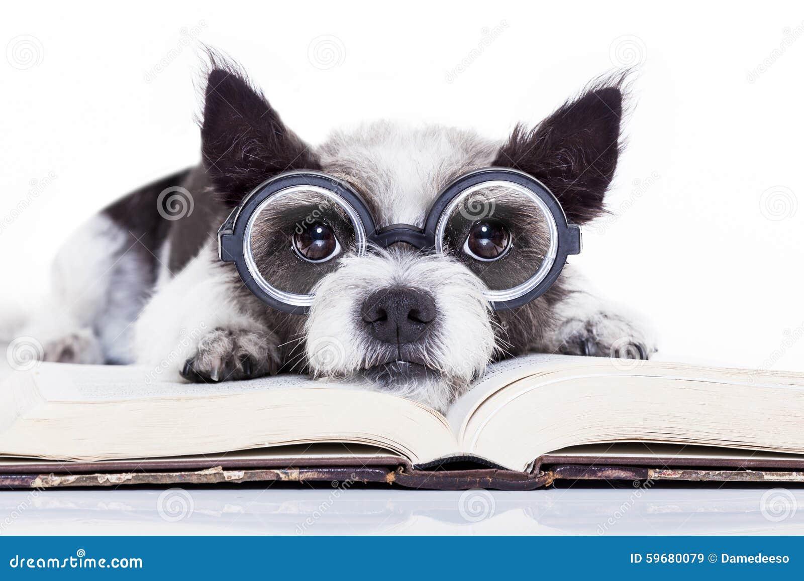 Dog Reading Books Stock Photo - Image: 59680079