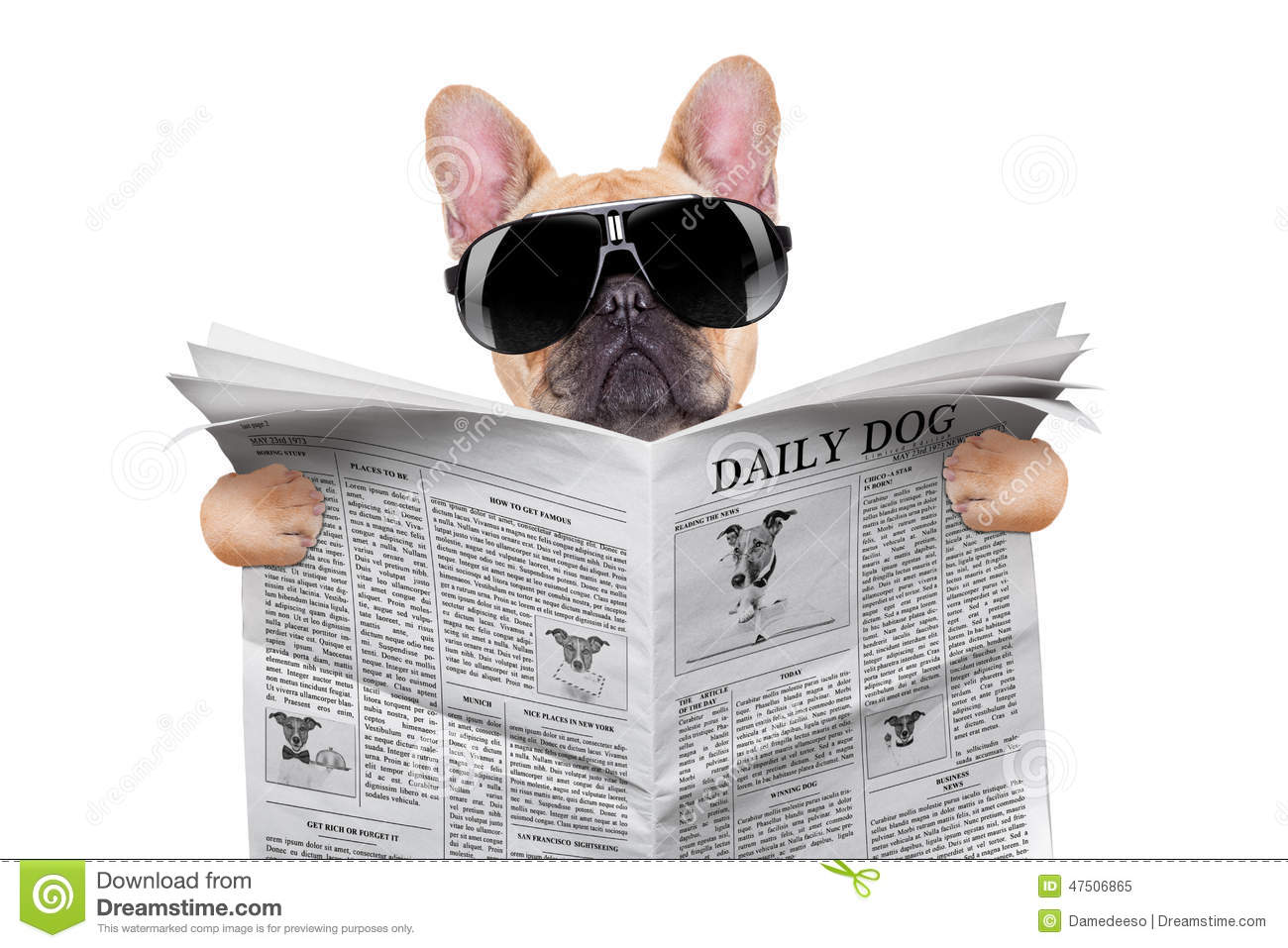 Dog Reading Stock Photo Image 47506865
