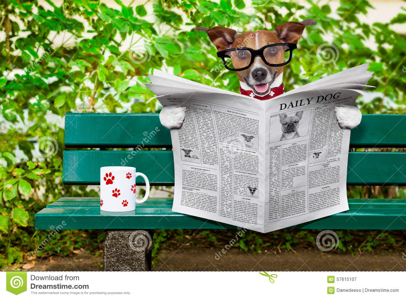 Dog Reading Newspaper Stock Photo - Image: 57615107