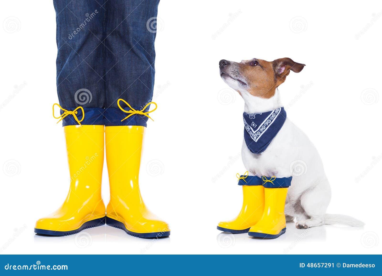Funny Dog After A Walk Stock Photography   CartoonDealer ...