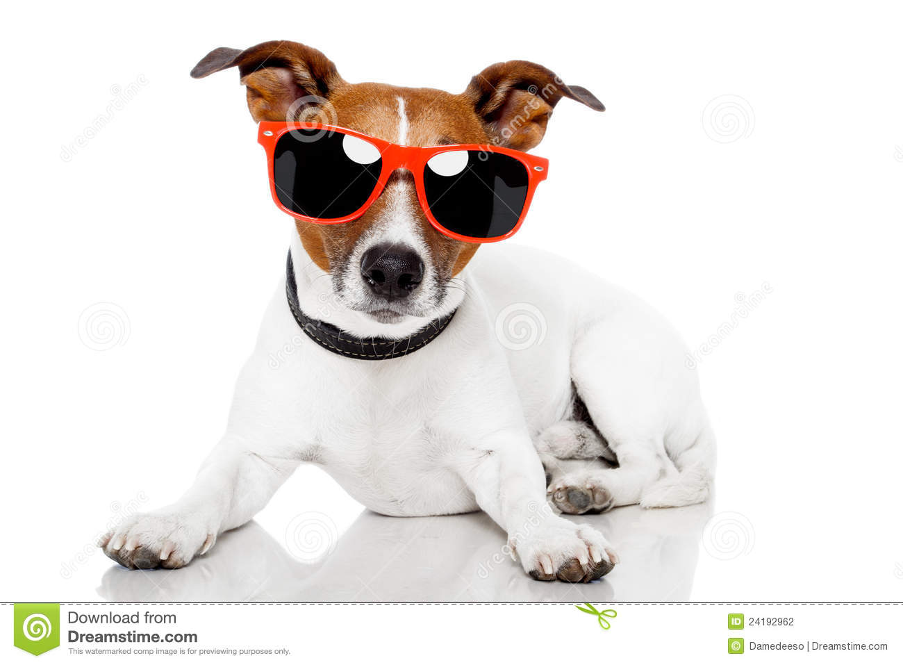 Dog With Red Shades On Stock Photography Image 24192962