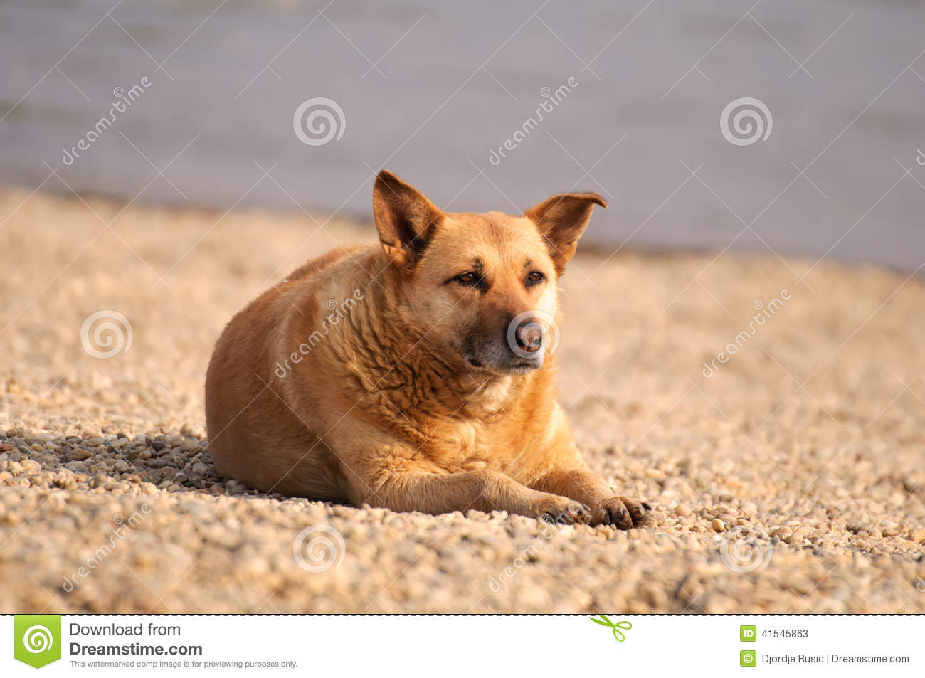 Dog Relaxing Stock Photo - Image: 41545863 Relaxing Dogs