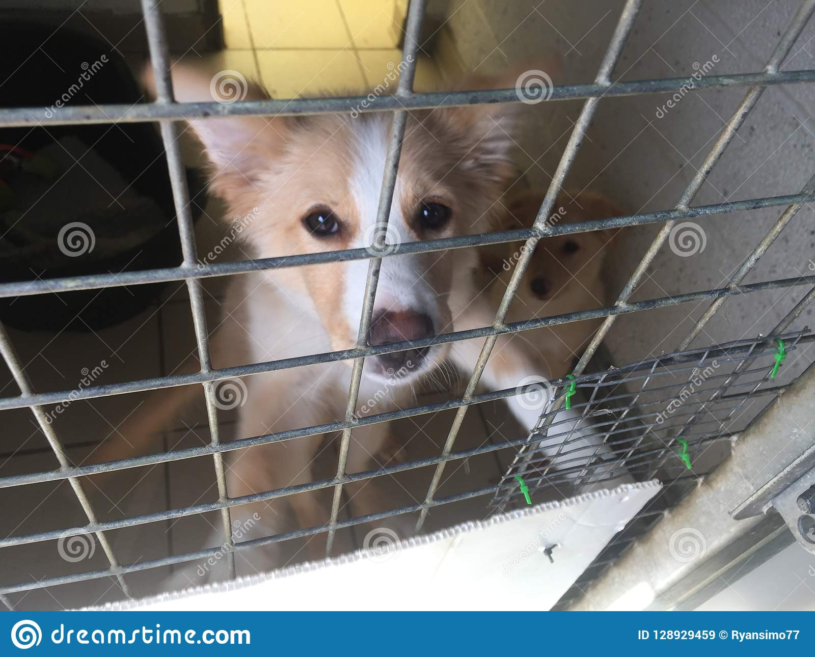 Dog at a rescue shelter in a cage