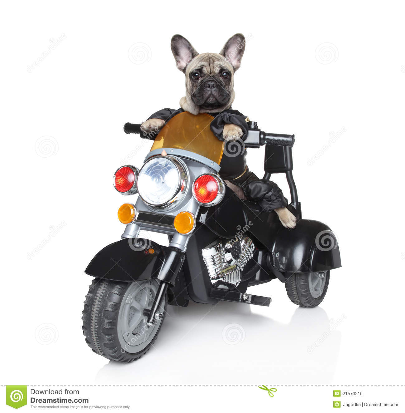 dog-riding-motorcycle-...