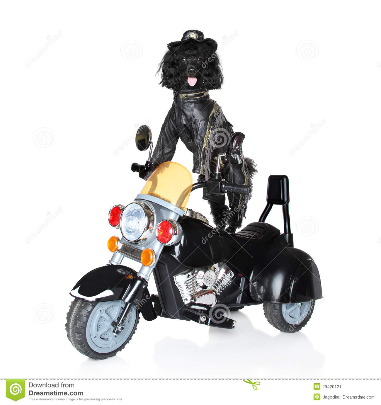 dog riding motorcycle clipart - photo #21