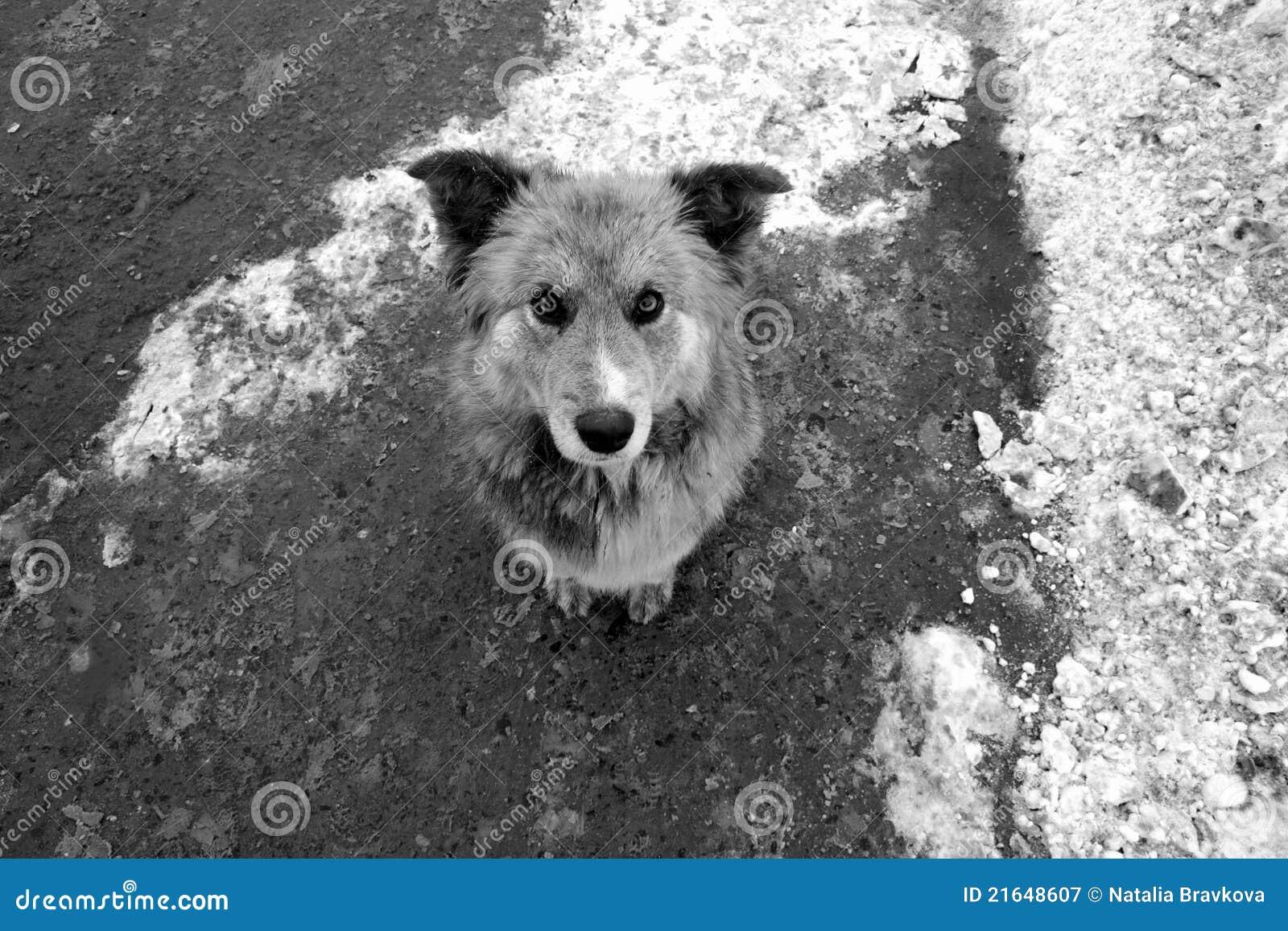 dog photo road - photo #41