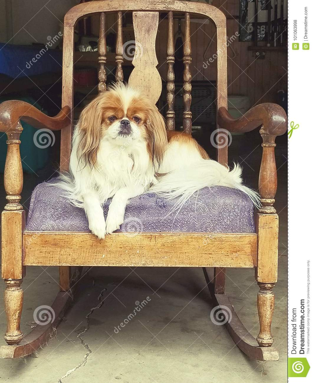 Remarkable Dog Rocking Old School Stock Photo Image Of Gizmo School Squirreltailoven Fun Painted Chair Ideas Images Squirreltailovenorg
