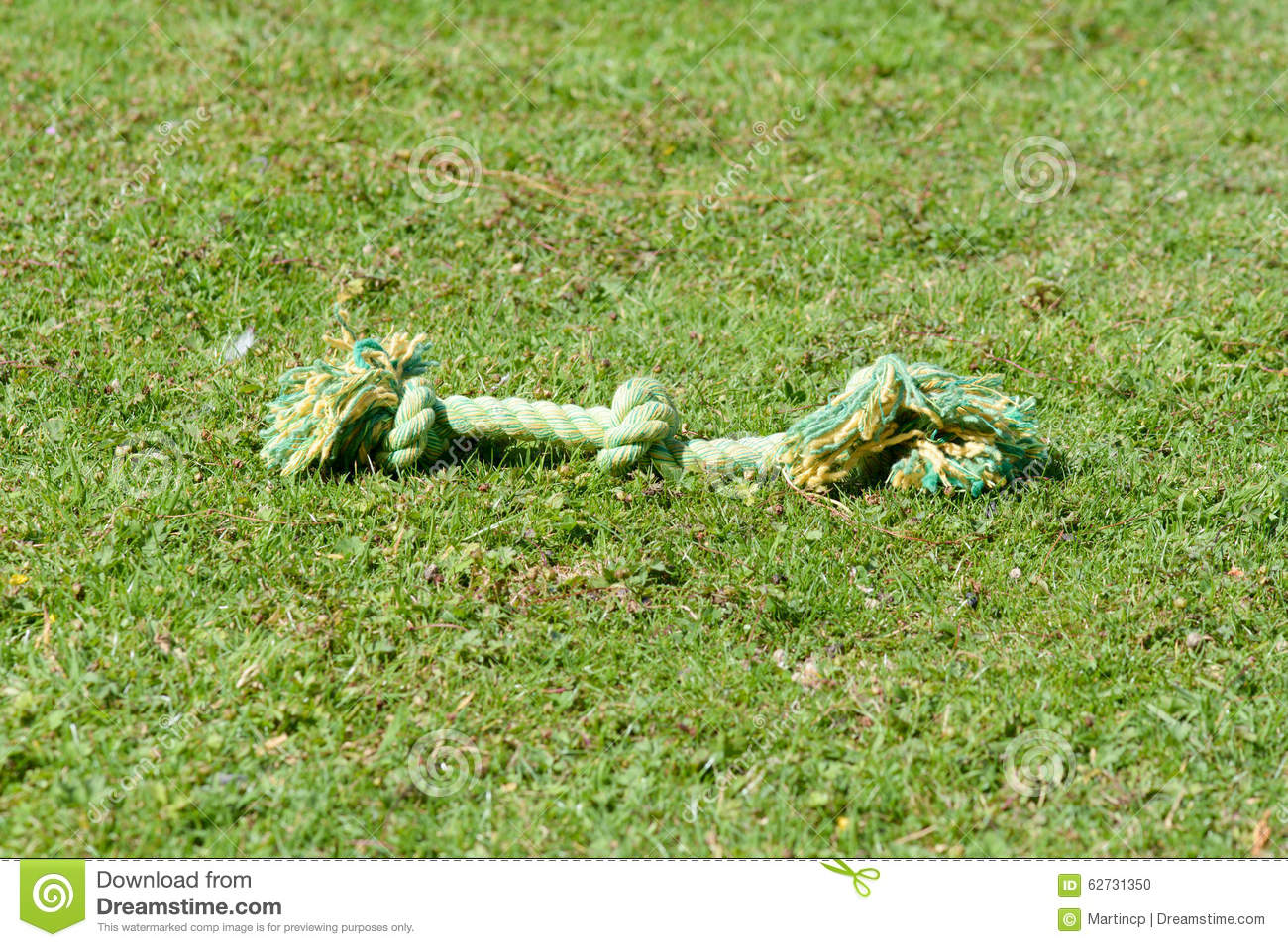 Dog rope tug toy on grass