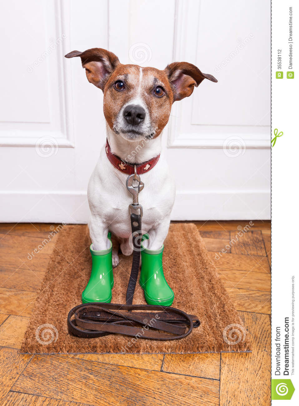 Dog Rubber Rain Boots Stock Photography Image 35538112